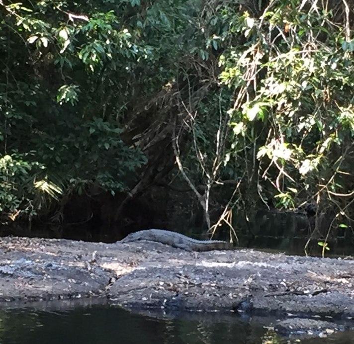 crocodile-khao-yai